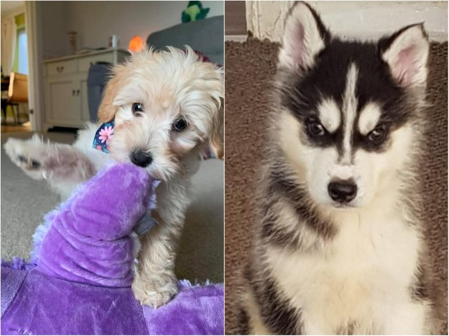 Readers share throwback pictures of their dogs when they were puppies.