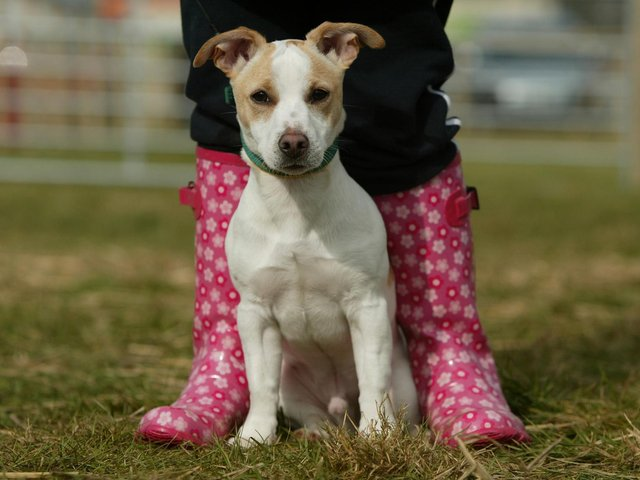 Make sure your dog is on a lead in the countryside