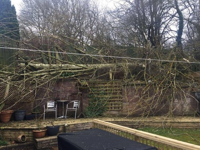 This was the aftermath of one resident's garden in 2018 after one of the 100-ft tall trees came crashing to earth.