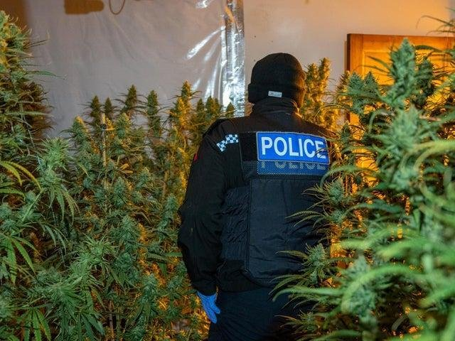 Police arrested Lavdrim Lleshi as he attempted to escape through the window of a cannabis farm in Allen Road. File photo.