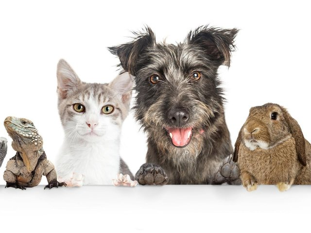 Enter our Top Pet competition for the chance to win a prize worth £50.