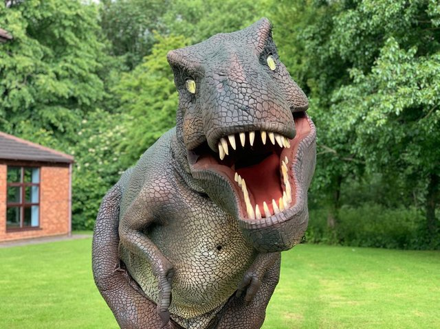 Dinosaurs are coming to Northampton town centre this summer.
