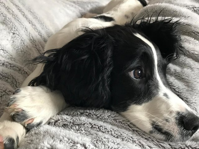Northampton's Top Pet winner, Barney.