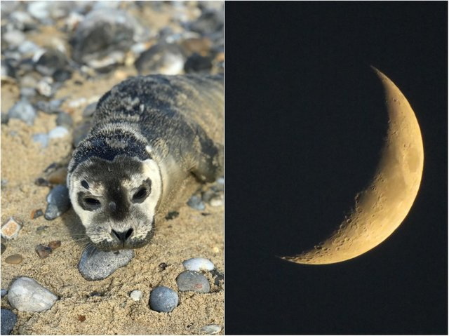 The winning shot (left) by Isabelle Davies, plus another submission (right).