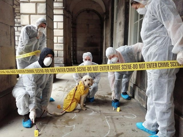 Become a crime scene investigator in this outdoor adventure brought to you by CluedUpp Games.